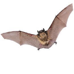 Briefmarken      des Themas Fledermäuse  '