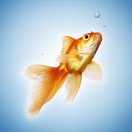 Briefmarken      des Themas Fische  '