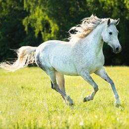 Briefmarken      des Themas Pferde  '