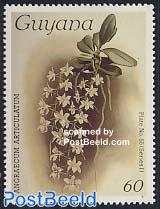 Orchid 1v