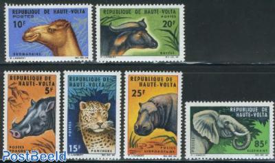Animals 6v